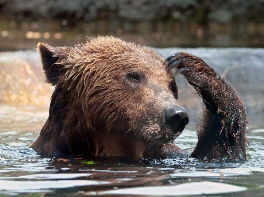 Image result for confused bear